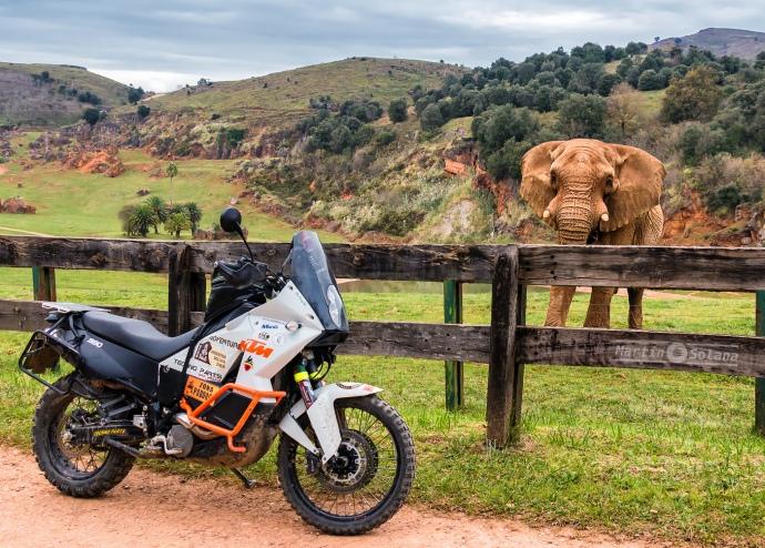 capi-elefante