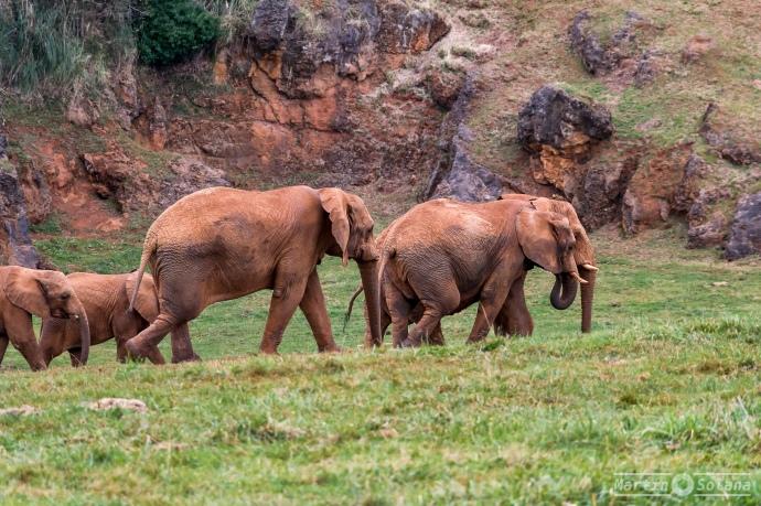 elefantes-manada