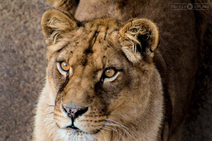 leon-cara-2